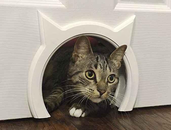 Дверь для кота/кошки