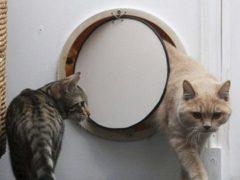 Лаз для кошки в двери, дверь для кошки своими руками