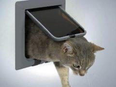 Дверь для кошки своими руками